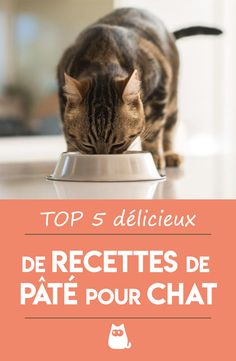 Croquettes Chat, Food Dog, Cat Treats, Baby Cats, Neko, Animals And Pets, Yummy Food, Delicious Recipes, Illustration