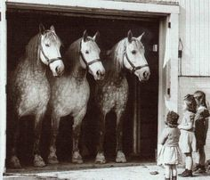 Three mighty large draft horses look on sweetly at three curious little girls.