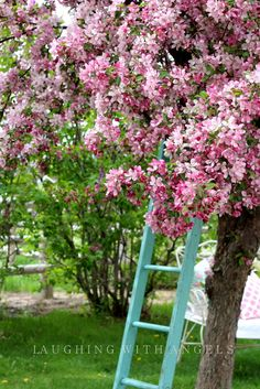 @ laughing with angels: a little bit of springtime