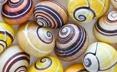 Nature's Masterpiece – Cuban Tree Snail Patterns In Nature, Textures Patterns, Interior Design Shows, Floating Garden, Snail Shell, Fairy Wings, Morning Light, Science And Nature, Amazing Nature