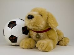 Heavenly Pals are urns for pet after it passes Pet Urns, Metal Containers, Golden Retrievers, Soccer Ball, Heavenly, Plush, Teddy Bear, Fur, Dogs