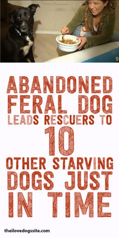Abandoned Feral Dog Leads Rescuers To 10 Other Starving Dogs Just In Time!