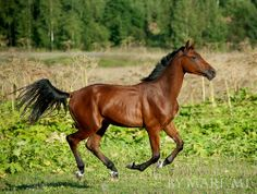 Bay Horse Looks like mine Bay Horse, Horse Ranch, Most Beautiful Animals, Beautiful Horses, Weak In The Knees, All About Horses, Farms Living, Zebras, Creatures