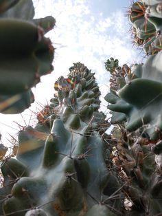 Cactus.Garden.Giant.