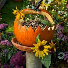 Fall Pumpkin Bird Feeder - This is a great idea!