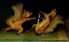 Taxidermied Squirrel fight