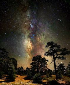 ~~Deep space, deep in the forest ~ astrophotography, Milky Way and stars, Cyprus by CostaDinos~~ All Nature, Science And Nature, Cosmos, Ciel Nocturne, Into The Wild, To Infinity And Beyond, Deep Space, Space Space, Milky Way