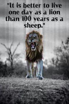 9 Best Heart Of A Lion Images Lion Of Judah Bible Verses Messages