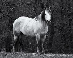 I am definitely partial to gray horses :)