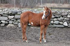 Gorgeous filly WKN Chicas Icon's grandson!