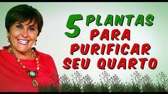 5 PLANTAS para PURIFICAR O SEU QUARTO por Márcia Fernandes