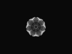 bergerstadelwalsh.com www.facebook.com/berger.stadel.walsh www.twitter.com/b__s__w  #swissdesign #graphicdesign #design #typography #baselschoolofdesign #mexico #australia #germany #switzerland #basel #bsw #bergerstadelwalsh #diseño #experimental #graphic #research #imagelab #kaleidoscope #blackandwhite