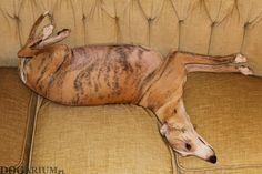 Whippet Tappinskis Rubi For Dogarium - 56 days pregnant <3