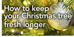 Keep your Christmas tree fresh longer! http://www.menards.com/main/c-19224.htm?utm_source=pinterest&utm_medium=social&utm_campaign=gardencenter&utm_content=keep-christmas-tree-fresh&cm_mmc=pinterest-_-social-_-gardencenter-_-keep-christmas-tree-fresh