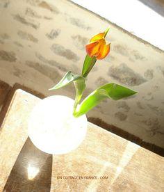 Le tulipes oranges et jaunes du cottage