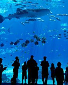 look at the size of that shark! Fish Aquariums, Tanked Aquariums, Aquarium Fish, Callaway Gardens, Georgia Aquarium, Home Aquarium, Bottlenose Dolphin, Hammerhead Shark, Whale Sharks