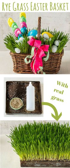 Rye Grass Easter Basket | A lively take on the classic Easter basket. Freshen up an old basket with some easy-to-grow rye (or wheat) grass and classic colorful eggs.