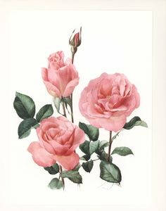 "Rose Print, 1960s ""Tiffany"" Bedroom Wall Art, Vintage Botanical Prints, Pink…"