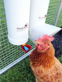 This set includes: 1 x 4 litre drinker (approx tall) with a single cup and rear hooks 1 x feeder (approx tall) with rain cover and rear hooks 2 x ergonomically designed lids Mobile Chicken Coop, Chicken Feeders, Backyard Chicken Coops, Chickens Backyard, Heated Chicken Waterer, Automatic Chicken Waterer, Buy Chickens, Raising Chickens, Best Inventions Ever