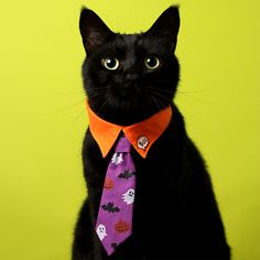 Dog Vest, Cat Noir, Pet Fashion, Cat Costumes, Animal Crafts, Cat Collars, Diy Stuffed Animals, Pet Accessories, Beautiful Creatures
