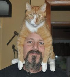 What These 28 Cats Are Doing Is Completely Bizarre, But Also Awesome
