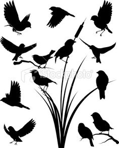 Google Image Result for http://i.istockimg.com/file_thumbview_approve/9457829/2/stock-illustration-9457829-sparrow-silhouette.jpg