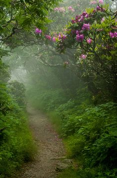 Craggy Path 2 Photograph by Joye Ardyn Durham - Craggy Path 2 Fine Art Prints and Posters for Sale