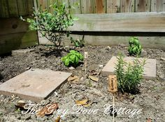 Rosemary, basil, and a blueberry bush.  Cork and skewer herb garden markers identify plants.