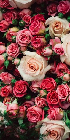 Many pink roses, flowers iphone xs/x wallpaper, background Pink Wallpaper Iphone, Aesthetic Iphone Wallpaper, Flower Wallpaper, Beautiful Flowers Wallpapers, Beautiful Roses, Orquideas Cymbidium, Rosa Rose, Rose Decor, Flower Aesthetic