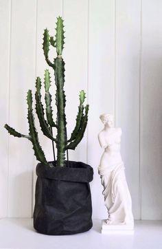 Kaktus, statue, interiør, cactus, interior Cactus Plants, Statue, Interior, Home, Indoor, Cacti, Ad Home, Cactus, Interiors