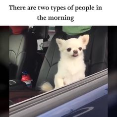 Me (Carley) and Brylie haha! (im the morning person btw) - Funny Dog Quotes - Me the morning Person vs Brylie the non-morning person. The post Me (Carley) and Brylie haha! (im the morning person btw) appeared first on Gag Dad. Funny Animal Jokes, Funny Dog Memes, Funny Video Memes, Funny Animal Videos, Cute Funny Animals, Funny Animal Pictures, Cute Baby Animals, Funny Dogs, Pet Memes
