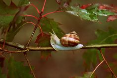 snails-leaves-red