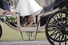 bride in horse and carriage. Wedding Photography Inspiration, Rustic Barn, Photography Poses, Engagement Photos, Photo Ideas, Horses, Bride, Country, Pictures