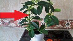 Dajte si do bytu túto rastlinu a na osviežovače vzduchu môžete zabudnúť!