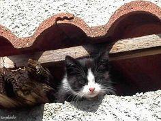 gatta sul tetto di campagna