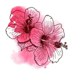 A bouquet of tropical Hibiscus flowers. Texture background watercolor effect. Vector illustration isolated on white background. A template for the design. Watercolor Effects, Abstract Watercolor, Watercolor Flowers, Watercolor Tattoos, Watercolor Ideas, Hibiscus Bouquet, Hibiscus Flowers, Apple Blossom Tattoos, Rosa China