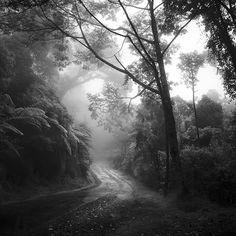 tropical Forest by Hengki24.deviantart.com on @deviantART