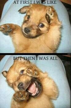 This is so my facial expressions bahaha  And this puppy is absolutely adorable btw(: