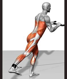 Cable skater exercise - The active muscles and the stabilising muscles are highlighted