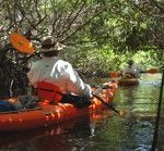 Kayaking - Everglades Mangrove Tunnel Eco Tour - FL - May 7, 2016 - Travel Wish List