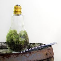 Terrariums seem to be making a comeback.  I remember these in the 80's as left overs from the 70's.