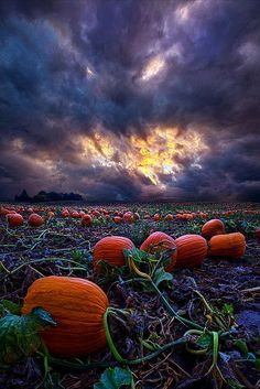 Tagged with fall, halloween, landscape, pumpkins, autumn; Halloween Is Near Autumn Scenery, Fall Pictures, Pumpkin Pictures, Fall Images, Fall Halloween, Halloween Pumpkins, Samhain Halloween, Happy Halloween, Google Halloween