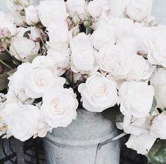 no rain no flowers My Flower, Pretty Flowers, White Flowers, Pink Roses, Deco Floral, Floral Design, Calla Lily, Planting Flowers, Floral Arrangements