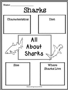 ALL ABOUT SHARKS - A fun filled activity book about sharks. This book includes reading comprehension an more! All About Sharks, Sharks For Kids, Shark Activities, Book Activities, Beach Activities, Ocean Unit, Teaching Kindergarten, Teaching Ideas, Thematic Units