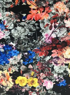 Everlasting Bouquet £7.00 / per metre    A polyester scuba jersey - black background with a black, white and grey photographic effect in mixed (almost dried/everlasting) floral bouquets, with richly coloured areas in warm gold, honey, peachy pink, rich red, soft and deep plum, vibrant cobalt blue, russet and coral.  A truly complex and fascinating print with dark, yet rich colourful tones too. Soft to the touch with a drapey medium weight handle, this fabric boasts a great body and good…