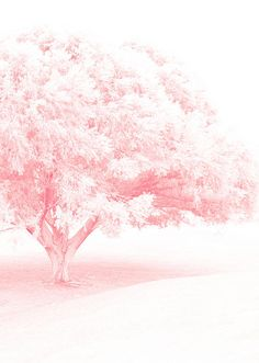 Pink Frost #pink #color #colours
