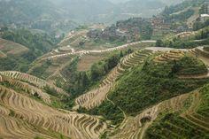 Terraços de arroz Dragon's Backbone – China - http://www.mundoporterra.com.br/historias-e-momentos/terracos-de-arroz-dragons-backbone-china/ - Os terraços de arroz aqui no sul da China são uma obra incrível de engenharia feita pelas mãos de campesinosda etnia Yao e essa foi a paisagem por onde andamos nos últimos dias.    #overland #overlanding #adventuretravel #travel #4x4, #Asia, #China, #Land_Rover