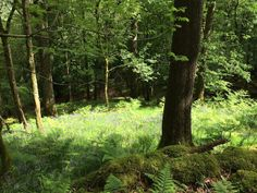 Beautiful, sunlit woodland glade, near Grasmere - what a find.