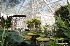 San Francisco Conservatory of Flowers - photos of plant conservatories - Google Search