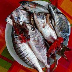 The gift of the sea...   https://www.instagram.com/p/BLngsiDg09H/  #polignanomadelove #polignanolovers #sea #fish #fisherman #WeAreInPuglia #discoveringpuglia #visitpuglia